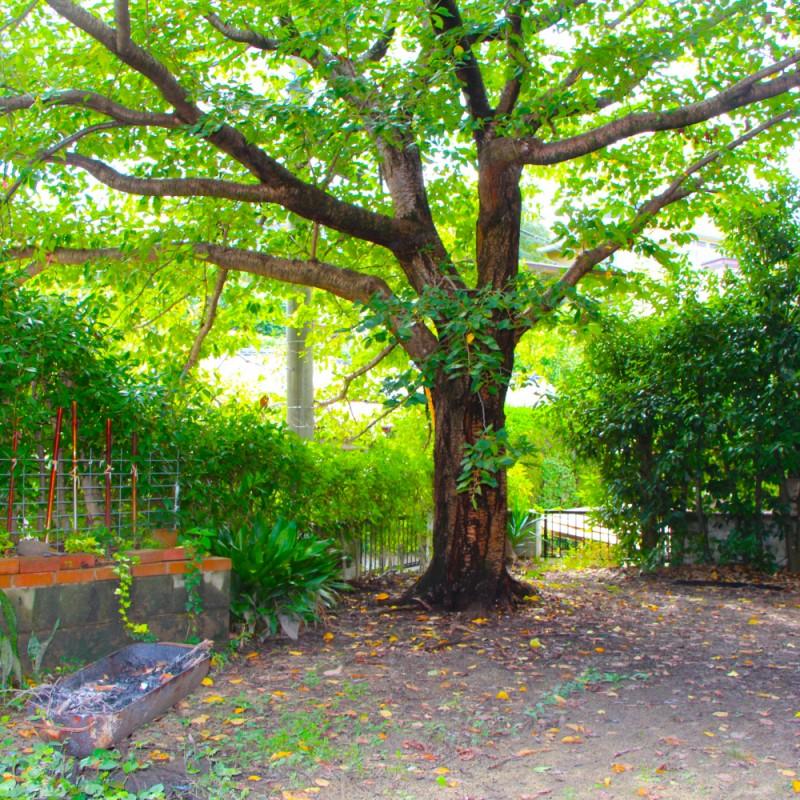 桜を中心とした緑に囲まれたお庭。周辺環境との親和性も高く、癒しの空間となっています。