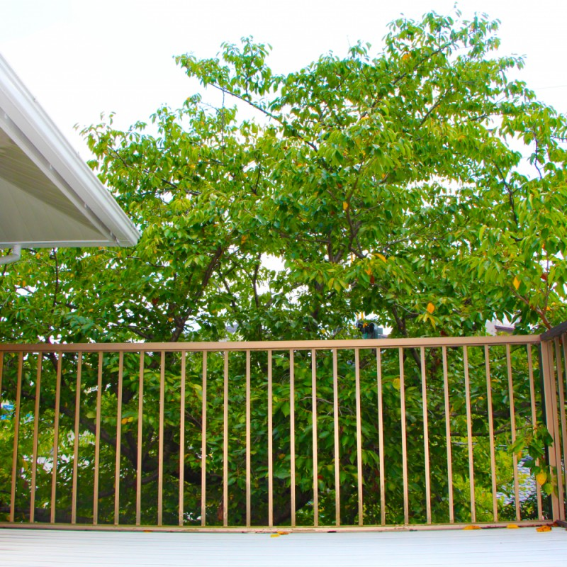 2Fバルコニーからも桜の木が見えます。誰にも邪魔されない家族だけのお花見されてみませんか?