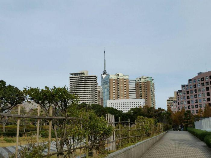 福岡タワーまでお散歩するのもいいですね☆