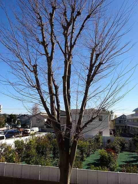 バルコニー前に桜の木が